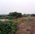 20081005_0031